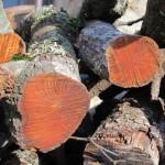 La madera de la experiencia