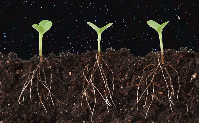 Plants Can 'Talk' To Each Other by Clicking Their Roots
